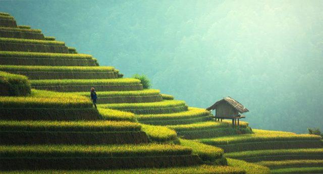 サラリーマンの副業で農業は本当にできるの?収入はどれくらいある?